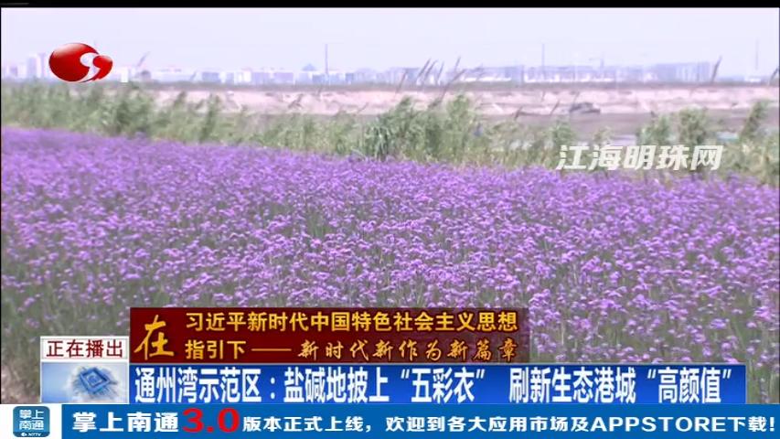 """通州湾示范区:盐碱地披上""""五彩衣"""" 刷新生态港城""""高颜值"""""""