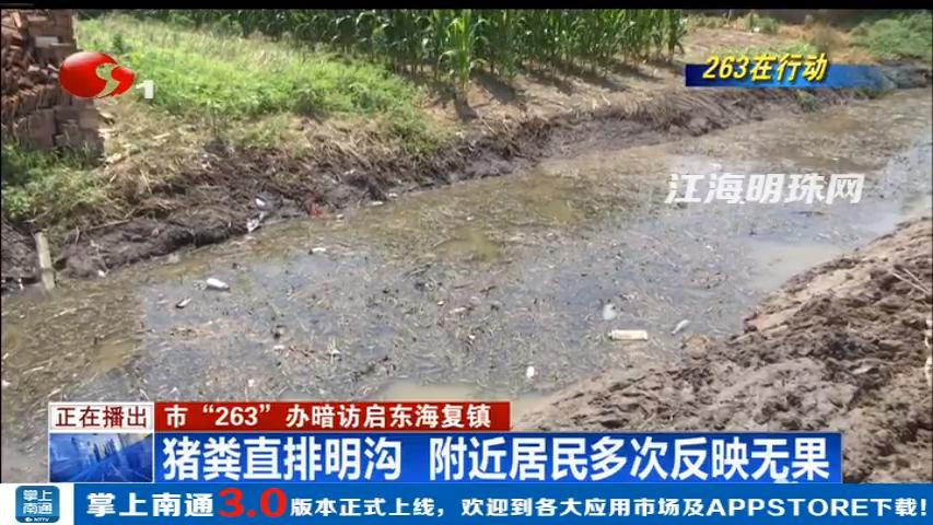 """南通市""""263""""办暗访启东海复镇:猪粪直排明沟 附近居民多次反映无果"""